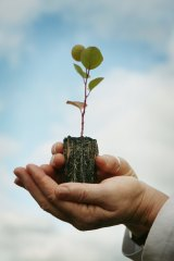 Green bonds, also known as climate bonds, are a segment of financial instruments issued by companies looking to demonstrate their ethical and social responsibility credentials.