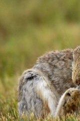 Rabbits control helps native plant regeneration.