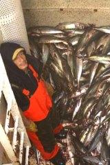 A small catch of jack mackerel aboard the Achernar.