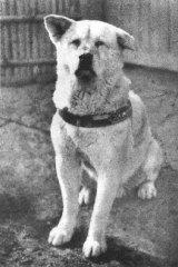 Hachiko the dog.