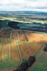 Cooler climate: Tasmania ticks all the boxes for Treasury Wine Estates.