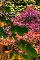 A riot of autumnal colours at Mount Macedon's Duneira.