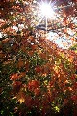 The sun peaks through the orange autumn leaves on the trees at Duneira.
