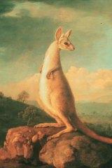 Kangaroo:<em> George Stubbs.</em>