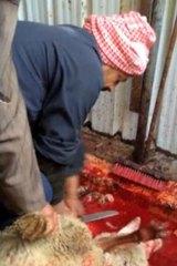 Notorious ... inside the Al Rai livestock market in Kuwait.
