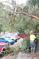 A tree down at Queanbeyan School where a mother and her child were injured.