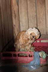 The RSPCA wants more funding to investigate the state's puppy farms.