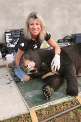Rights minded ... Jill Robinson with rescued bear Jasper.