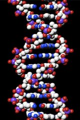 Human DNA: Not patentable.