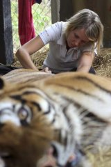 Lucy Clark caring for an injured tiger.