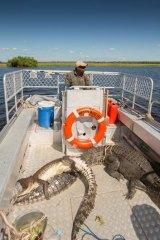 """Humbugging crocs"": Kakadu ranger Joseph May on Betty Boo III with crocs that have been caught on Djabiluka Lagoon."