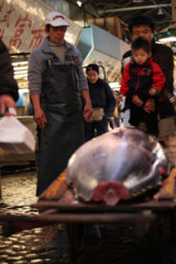 Wholesalers with a bluefin tuna to be sold at Tokyo's Tsukji market.