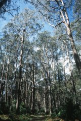 Disputes over logging are often hijacked by sentiment instead of facts, says Mark Poynter from the Institute of Foresters of Australia.