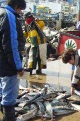 Jack mackerel sold in Valparaiso in Chile.