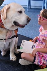 "Classroom canine: Glengala Primary School first-grader Skye is helped with her reading by Atticus. ""He's all soft and he listens."""