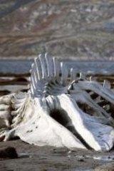 Extreme injustice: <i>Leviathan</i>.