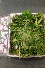 Police found 1.6kg of cannabis in the man's car.