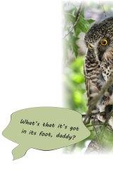 Selfish Powerful Owl, refusing to share.