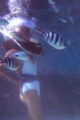 Underwater pose off: Shanali can work it underwater and on land.