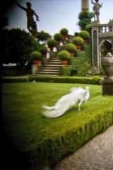 Improbability: Christopher Koller captured beautiful images of the 17th-century gardens of Isola Bella by using a camera with a plastic lens.