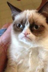 Grumpy Cat achieved internet fame.