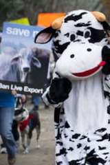Protestors march to protest live export.