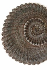 Proper copper art … Bronwyn Oliver's 2005 copper piece Ammonite.
