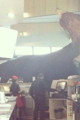 No one was hurt when a giant eagle used in the <i>Lord of the Rings</i> crashed at Wellington Airport.