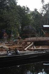 Although logging is illegal, sawmills dot the riverbanks of the Katingan Peatlands – home to 4000 organ-utans.