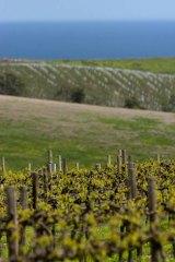 The rolling Chapel Hill vineyard.