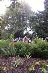 Kew Gardens director of horticulture Richard Barley plants the Charmaerops palm.