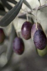 Kyneton olives.