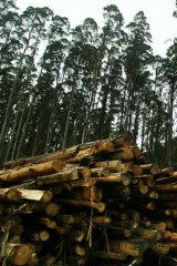 VicForests will take over sole responsibility for calculating the amount of timber that can be sustainably harvested.