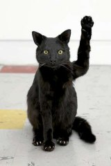 You'll be waved in by Greatest Hits' black cat.
