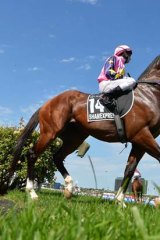 Trainer Danny O'Brien believes Shamexpress will improve significantly as a result of his experience.