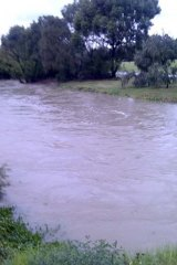 Flooded Gardiners Creek at Glen Iris.