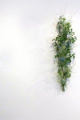 It's wild: Weed cluster by Lauren Berkowitz.
