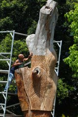 A cut above the rest . . . Vic Simms carves Aboriginal patterns into the tree.
