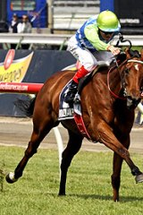 Craig Williams goes for home aboard Brazilian Pulse in yesterday's VRC Oaks at Flemington.