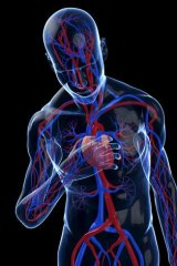 Reprogrammed stem cells could be used to rebuild damaged hearts.