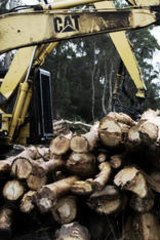 Logging on: Gunns' softwood sawmills are working ahead of their sale.
