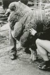 Denis Napthine, in his younger days, poses in woolen underwear made by a company in his electorate.