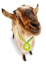 Ethical shopping got your goat? Here's one from Oxfam.