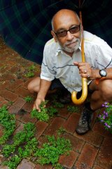 Wild and free ...  Paul van Reyk likes to use purslane from his back yard in his cooking.