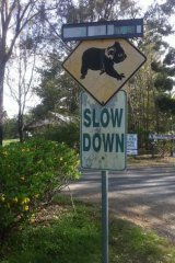 Koala signs are common throughout Petrie.