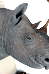 An early 20th century antique black rhinoceros head with horns.