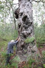 The Guardian Tree