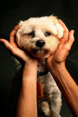 Monika Biernacki with Flopsy at her dog shelter in Ingleside.