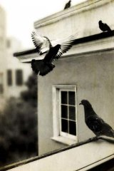 iPhoneography ...  <i>Mondaine des Arnaqueurs</i> by Knox Bronson.