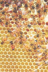 A hive of activitiy, from <i>The Bee Friendly Garden</i>, by Doug Purdie.